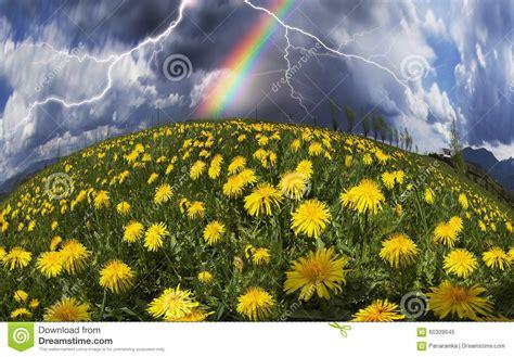 fiori della primavera fiori della primavera e di estate della radura immagine