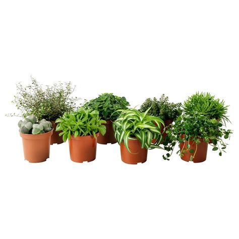 in door plants pot video three four plants argements piante da vaso vasi e fioriere piante da vaso giardino