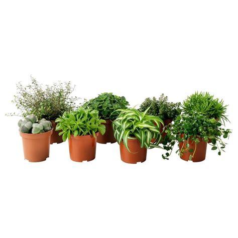 plants for small pots piante da vaso vasi e fioriere piante da vaso giardino