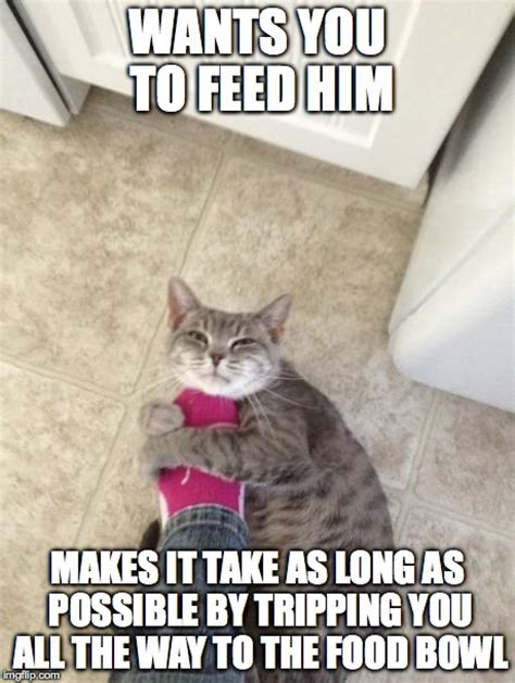Annoyed Cat Meme - hungry cats are annoying imgflip