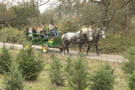 best u cut tree farms seattle area best u cut tree farms in the bay area
