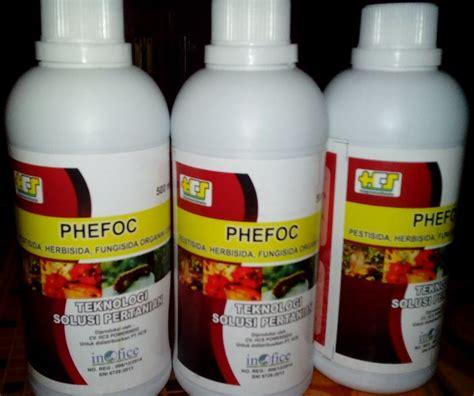 Obat Pembasmi Jamur Pada Tanaman Padi cara mengatasi hama wereng pupuk phefoc hcs pestisida