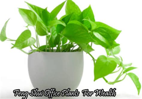 good plants for office cubicle plants office desk plants looks awesome which are
