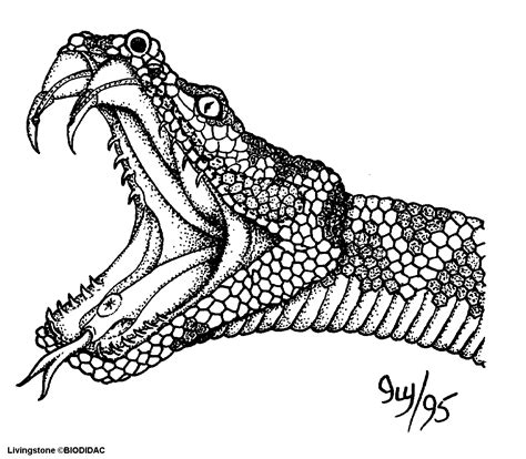 anaconda coloring pages viewing gallery for king cobra