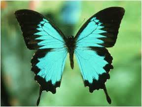 colors of butterflies karenina s musings happy butterfly day butterfly