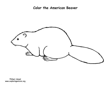 beaver template beaver coloring page coloring pages