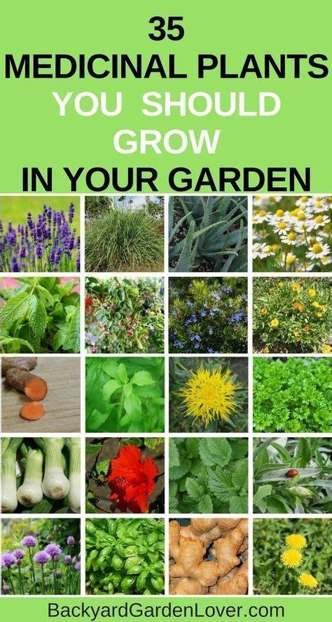 grow     medicinal plants   garden