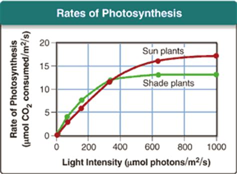How Does Light Intensity Affect Photosynthesis by Biology Itext