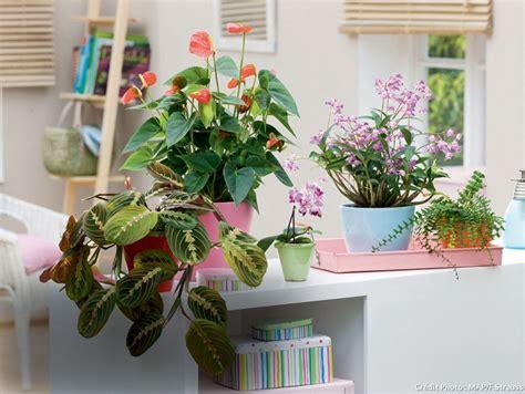 Impressionnant Toutes Les Plantes Vertes D Interieur #1: dj86_plantes-interieur_map.jpg?itok=vCpQqT8s