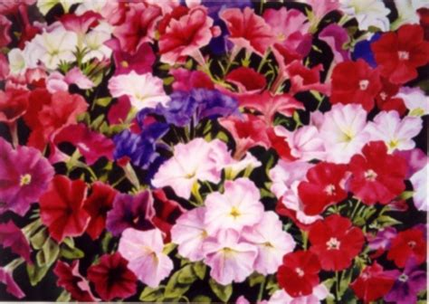 different type of flowers perennial annual spring