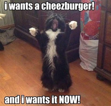 Cheeseburger Meme - cat wants cheeseburger rumble