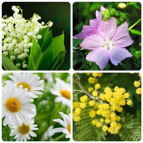 significati dei fiori significato dei fiori mamma felice
