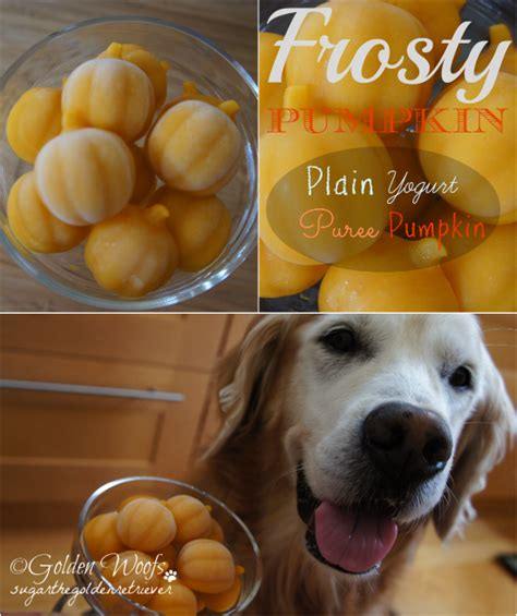 pumpkin puree for dogs 20 treat recipes the craftiest