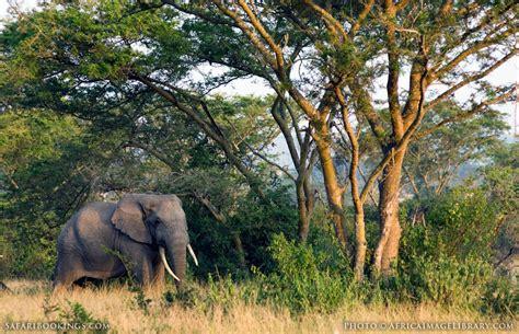 queen elizabeth national park uganda queen elizabeth national park queen elizabeth national park travel guide map more