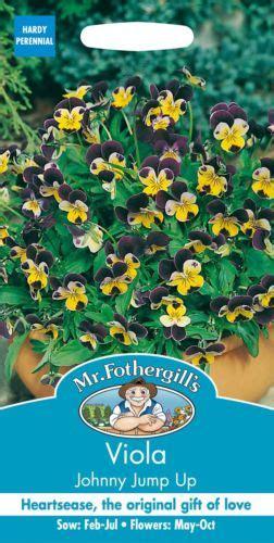 Benih Bunga Viola Jenis 4 jual bibit benih basil bunga viola johnny jump up kebun