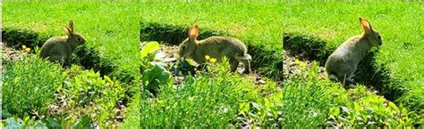 How To Keep Animals Out Of Garden by How To Keep Animals Out Of The Garden Fluster Buster