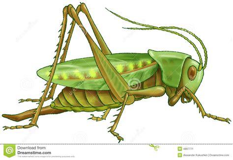 imagenes de saltamontes verdes saltamontes verde imagen de archivo imagen 4897771
