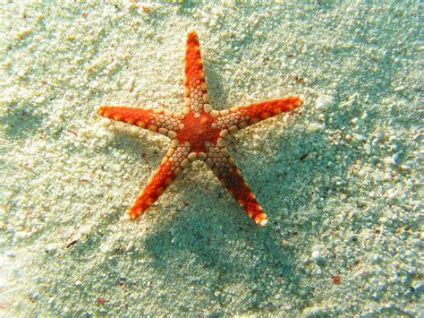 wallpaper bintang wallpapers starfish wallpapers