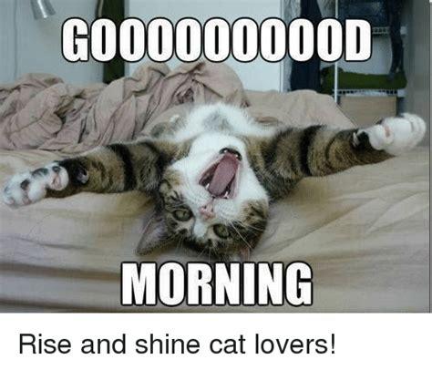 Cat Lover Meme - coooooooood morning rise and shine cat lovers meme on