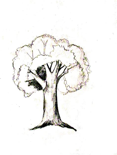 A Sketches Of Trees by How To Draw A Tree