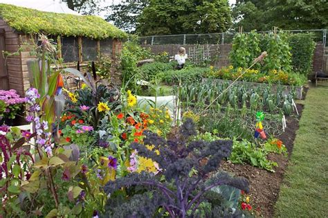 Allotments How Get The Best From Your Plot Rhs Garden Allotment Ideas