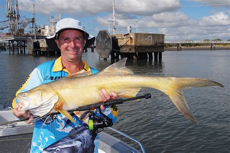 big boat hire brisbane pointers for prawns whiting and brisbane river threadfin