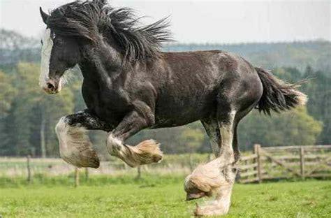 manso mais cara do mundo 2015 top 10 ra 231 as de cavalos mais caras do mundo bom jardim
