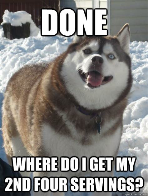 Huskie Meme - funny husky face