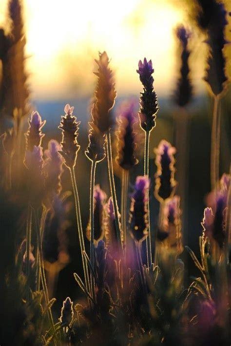 Artistic Appeal lavendar artistic appeal in 2018 lavender