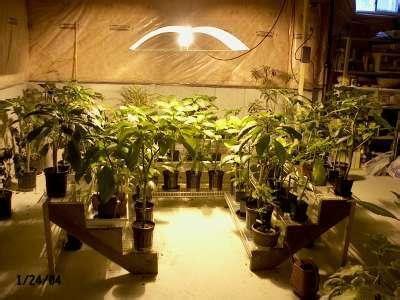 hydroponics equipment supplier senua hydroponics