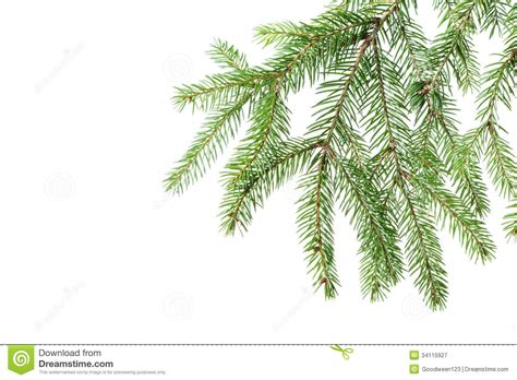 fir green green fir branch for decoration royalty free stock photography image 34115927