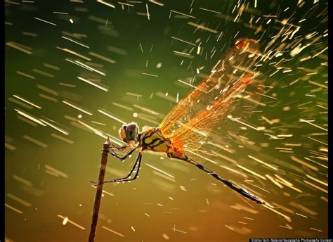 contest winner 2011 pictovista 15 winners of the national geographic photo