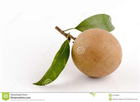 p fruits sapodilla plum sapota manilkara zapota l p royen