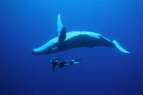 into the blue underwater sounds of nature for relaxation paisajes naturales taringa