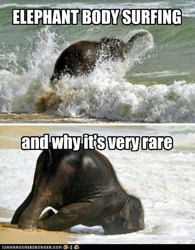 Elephant Meme - funny elephants memes www imgkid com the image kid has it