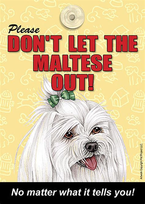 maltese don t maltese don t let the breed out sign suction cup 7x5