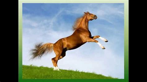 imagenes animales movimiento caballos en movimiento youtube