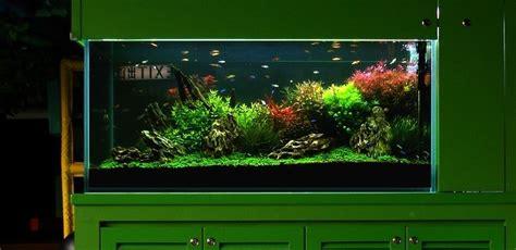 membuat aquascape dinding 20 ide kreatif decorasi aquarium dinding atagaleri net