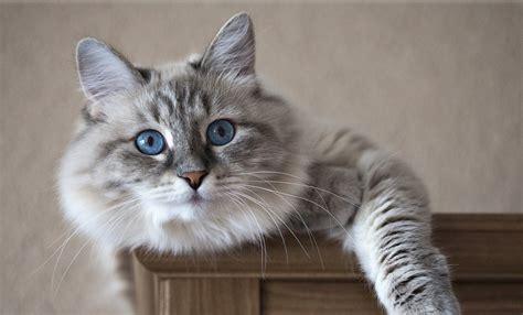 imagenes cool de gatos 30 cosas de los gatos que no sab 237 as imujer
