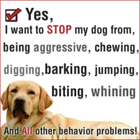 bad puppy behavior you can stop dogs bad behavior problems problems