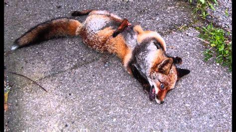 imagenes animales muertos atropello de animales en carreteras 10 millones de