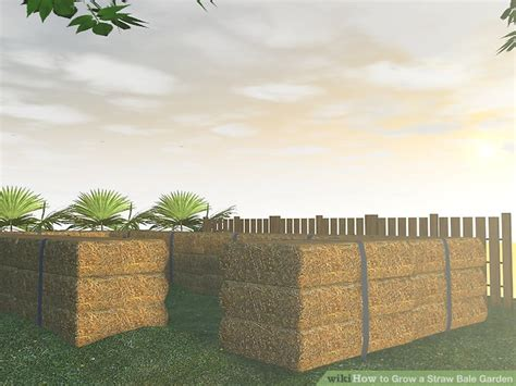 how to grow a straw bale garden 9 steps with pictures