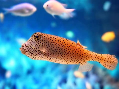 fish pictures sea  ocean fish pictures gallery