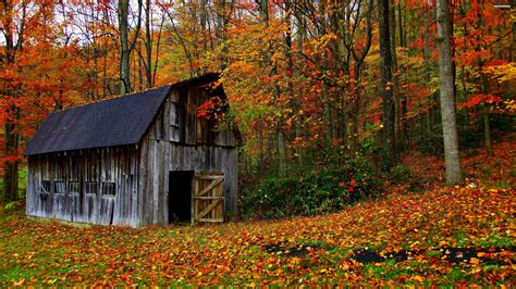 Ralph Watermill Wallpaper by Barn In The Colorful Forest Walldevil