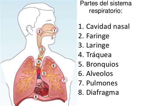 imagenes del sistema respiratorio ingles biofisica ug unidad 2 desarrollo