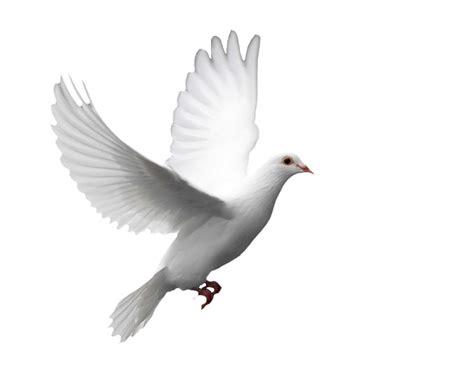 imagen sin jpg 191 por qu 233 la paloma es el s 237 mbolo de la paz resumen lvl 5