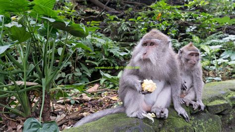 monkey forest ubud entrance fee cost latest update price