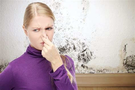 musty smell in house how to get rid of musty odor in bedroom www indiepedia org