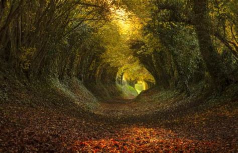 flower tunnel 30 tree tunnels that will take your breath away organic