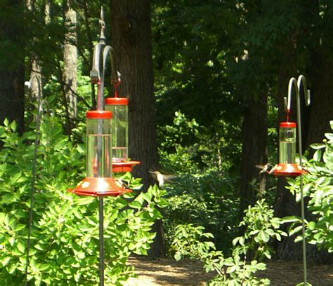 how to attract hummingbirds hummingbird flowers and